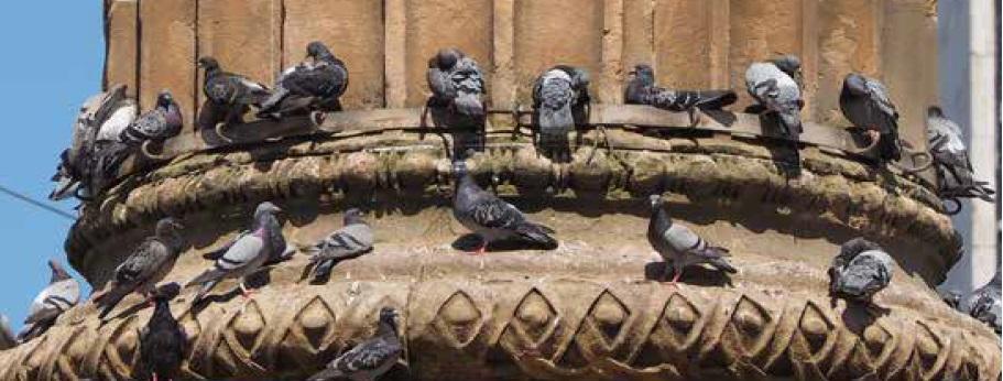 siete proti holubom